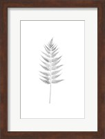 Framed Palm I