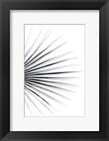 Framed Palm IV