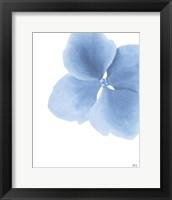 Framed Blue Pansy