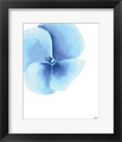 Framed Blue Pansy II