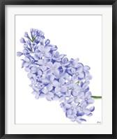 Framed Lilac Flower