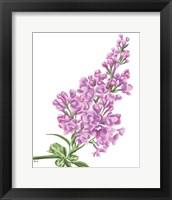 Framed Lilac Flower in Pink