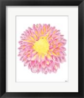 Framed Pink Chrysanthemum
