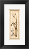Framed Bamboo