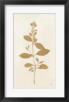 Framed Botanical Study VIII Gold