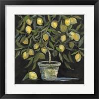 Framed Lemon Tree