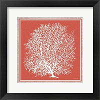 Framed Coastal Coral on Red I