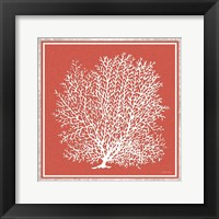 Framed Coastal Coral on Red II