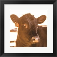 Framed Baby Cow I