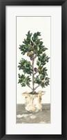 Framed Olive Tree