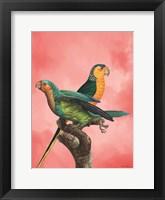 Framed Birds and the Pink Sky I