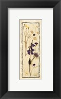Framed Dried Flowers IV