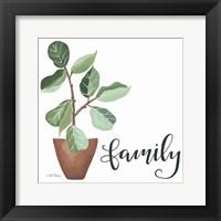 Framed Plant Family