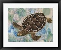 Framed Sea Turtle Collage 2