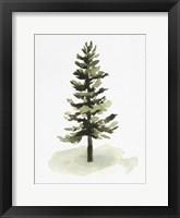 Framed Watercolor Pine II