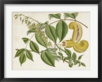 Framed Tropical Foliage & Fruit I