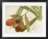 Framed Tropical Foliage & Fruit III