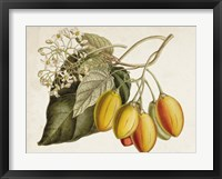Framed Tropical Foliage & Fruit IV