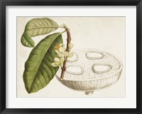 Framed Tropical Foliage & Fruit VII