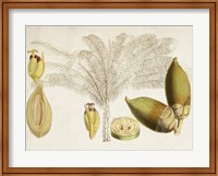 Framed Tropical Foliage & Fruit VIII
