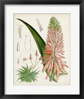 Framed Delicate Tropicals I