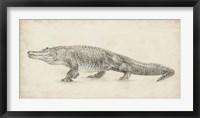 Framed Alligator Sketch