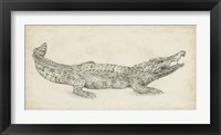 Framed Crocodile Sketch