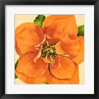 Copper Petals I Framed Print