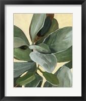 Framed Plant Study I
