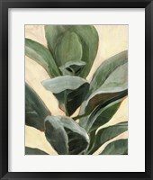 Framed Plant Study II