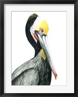 Framed Watercolor Pelican I