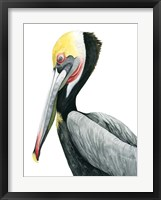 Framed Watercolor Pelican II