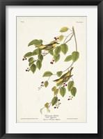 Framed Pl. 60 Carbonated Warbler