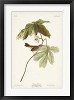 Framed Pl. 64 Swamp Sparrow