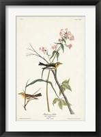 Framed Pl. 135 Blackburnian Warbler