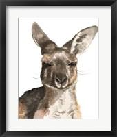 Framed Kangaroo Portrait I