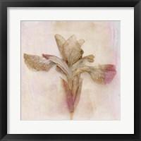 Framed Remembered Flowers I