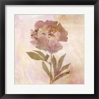 Framed Remembered Flowers II