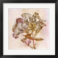 Framed Remembered Flowers III