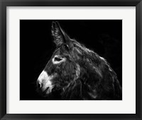 Framed Donkey Portrait I