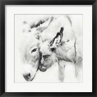 Framed Donkey Portrait III