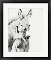 Framed Donkey Portrait V