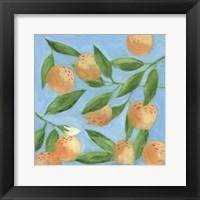 Framed Sweet Tangerine II