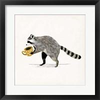 Framed Rascally Raccoon III