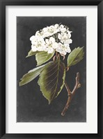 Framed Dramatic White Flowers I