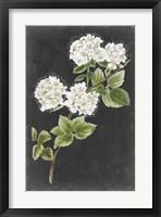 Framed Dramatic White Flowers II