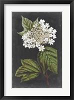Framed Dramatic White Flowers III