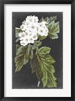 Framed Dramatic White Flowers IV
