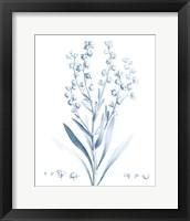 Framed Antique Botanical in Blue I