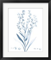 Framed Antique Botanical in Blue I